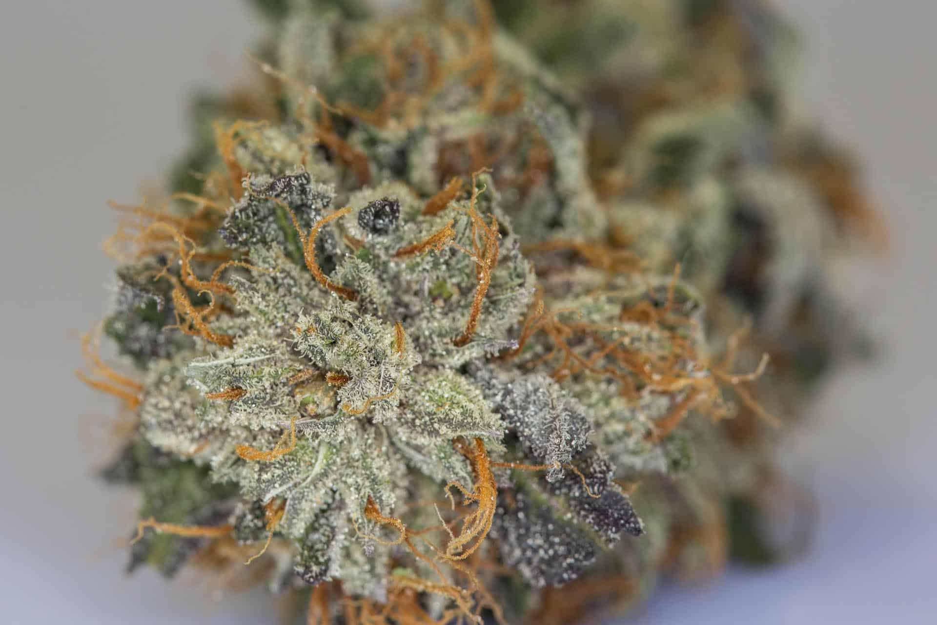 Medical Marijuana Dispensary Bellingham
